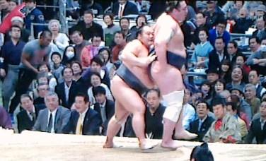 20150313 豊ノ島栃ノ心2