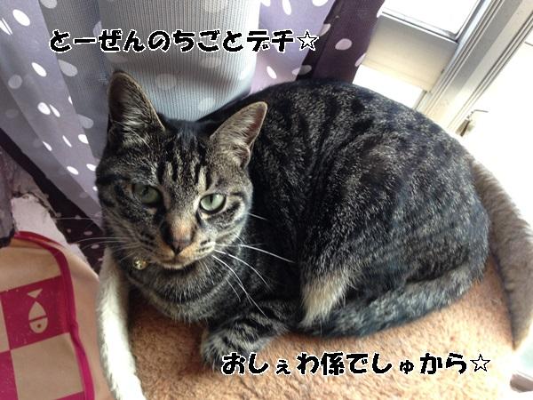 IMG_8808.jpg