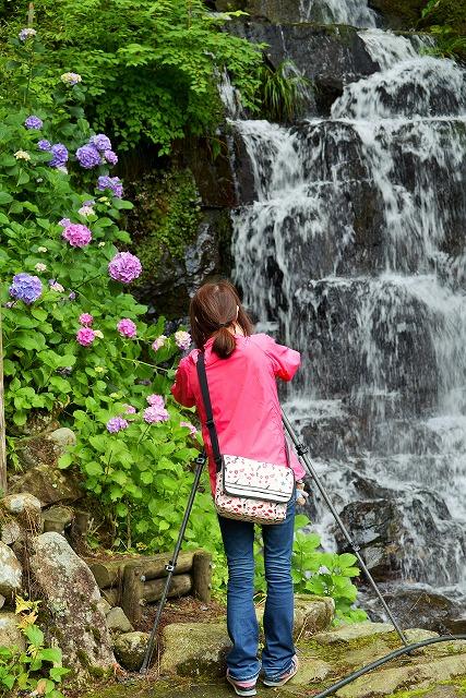 小滝と紫陽花とカメラ女子1
