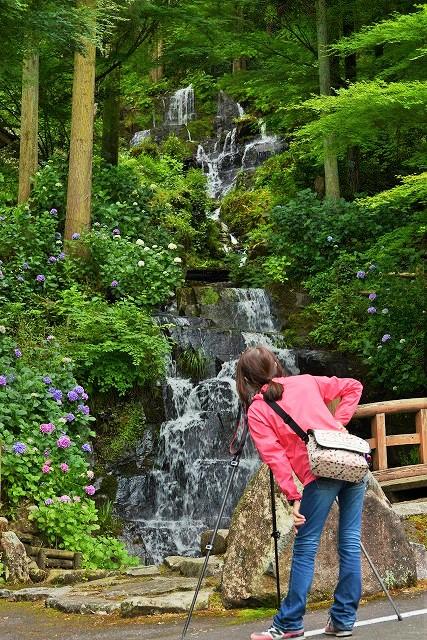 小滝と紫陽花とカメラ女子2