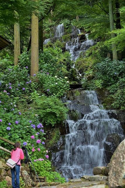 小滝と紫陽花とカメラ女子3