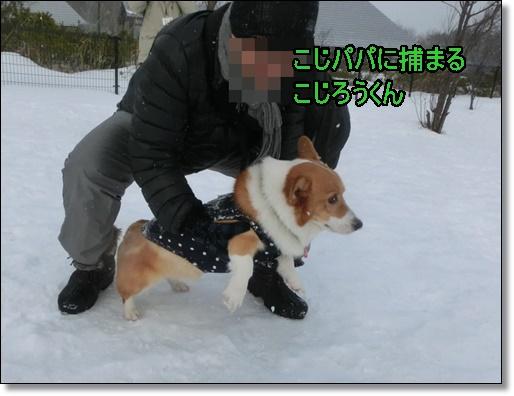 CIMG4115_xlarge.jpg