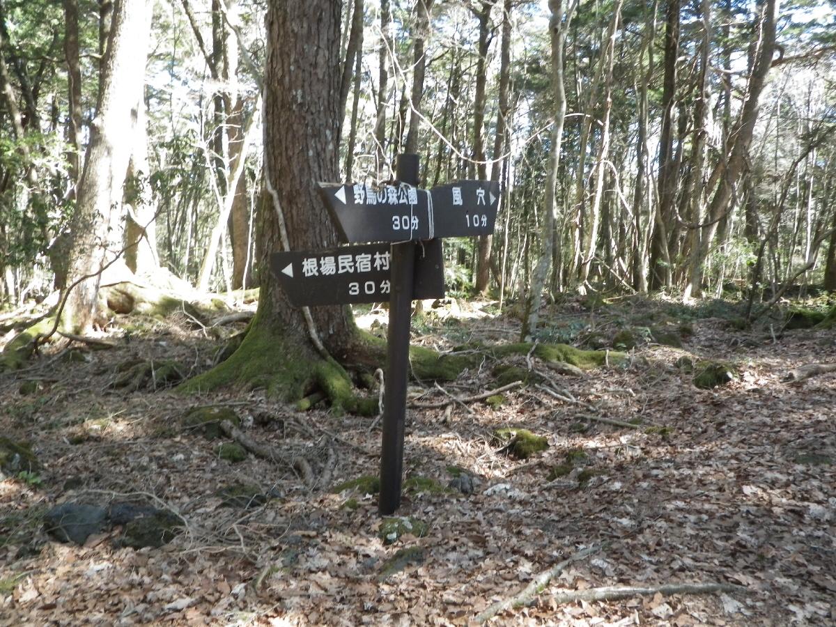 富士山隠れスポット6樹海の分岐点