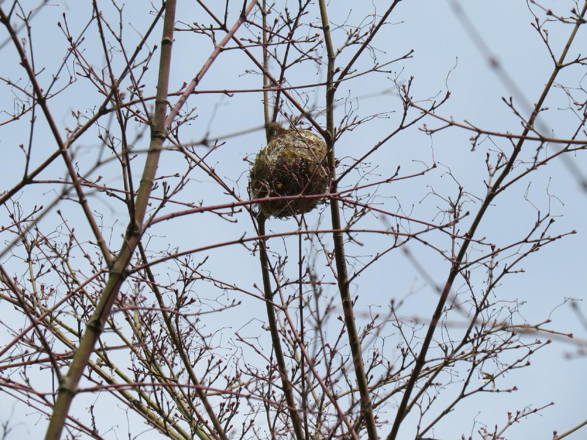 富士山隠れスポット14鳥の巣