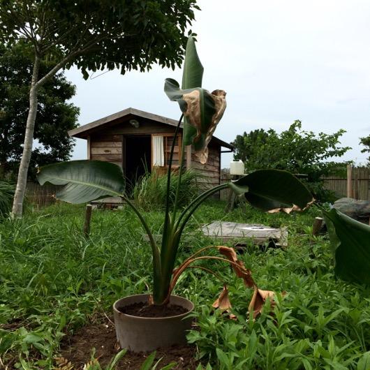 garden20150628 - 2
