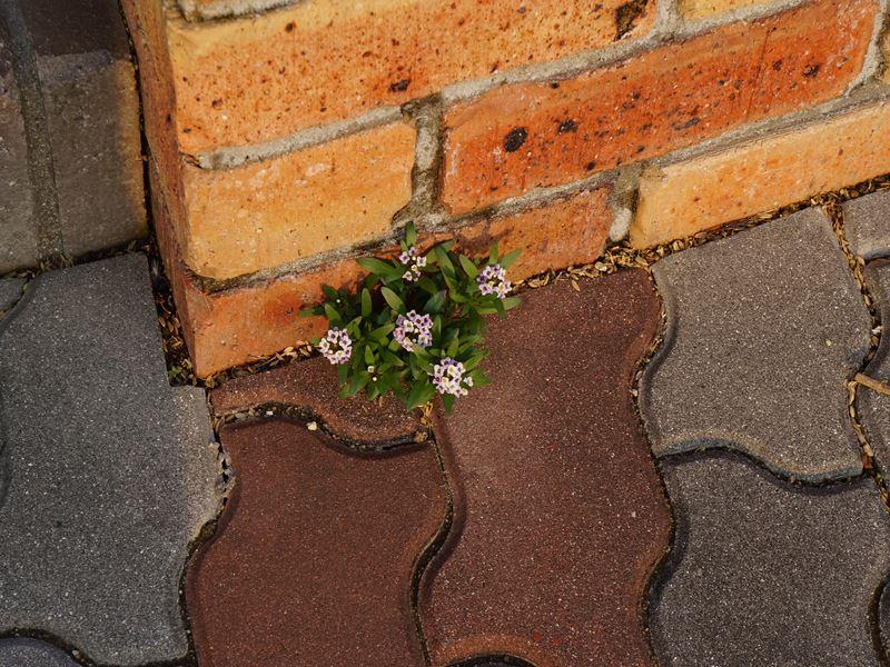 零れ落ちた花