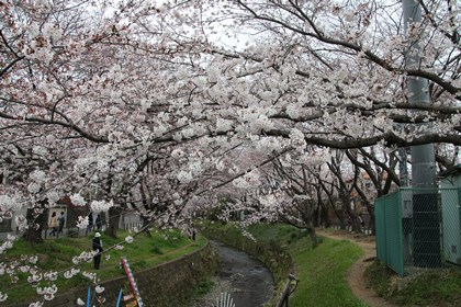 3/29 千本桜