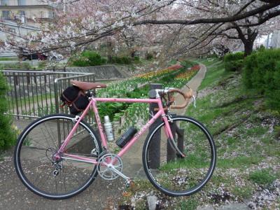 桜 デローザ