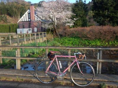 獅子ヶ谷 桜