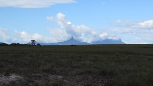 サバンナ14ロライマ山