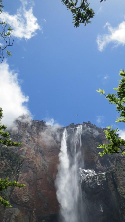 雲中9木々