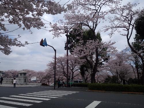桜5南浅川橋