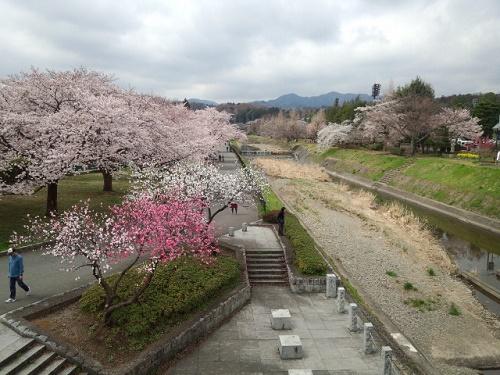 桜10上流