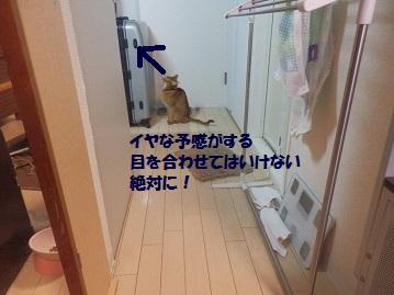 P1170109.jpg
