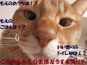 P2080152.jpg