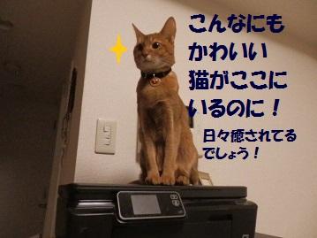 P3250363.jpg