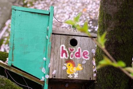 hide_sakura.jpg