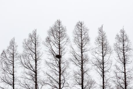 metasequoia-.jpg