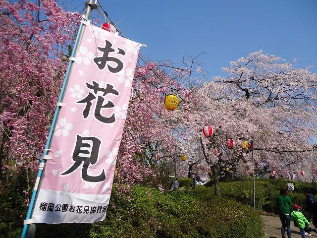 1504sakura003.jpg
