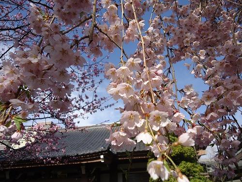 1504tokusenji007.jpg