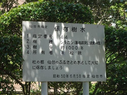 1505tera006.jpg