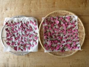 桜の塩漬け、干す