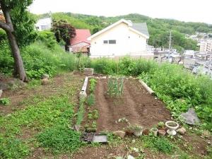 6月上旬の畑
