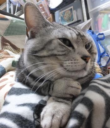 考え込む猫2