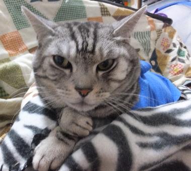 考え込む猫1