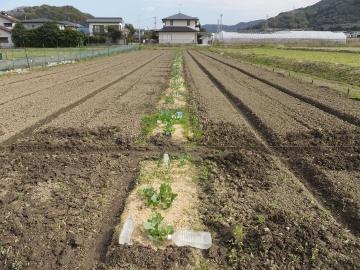 27年度農園準備3