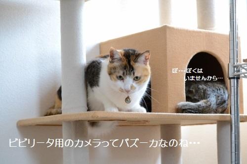 DSC_0227 (500x333)