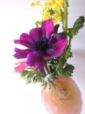 ラナンキュラス、アネモネ、菜の花