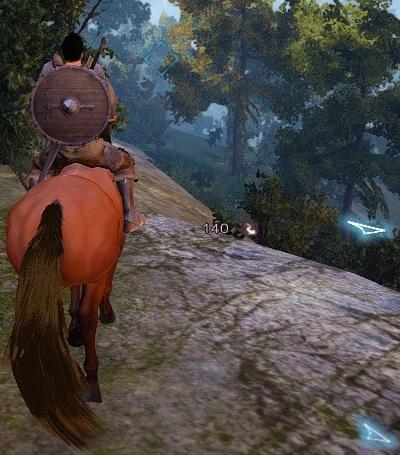 初めての野生の馬