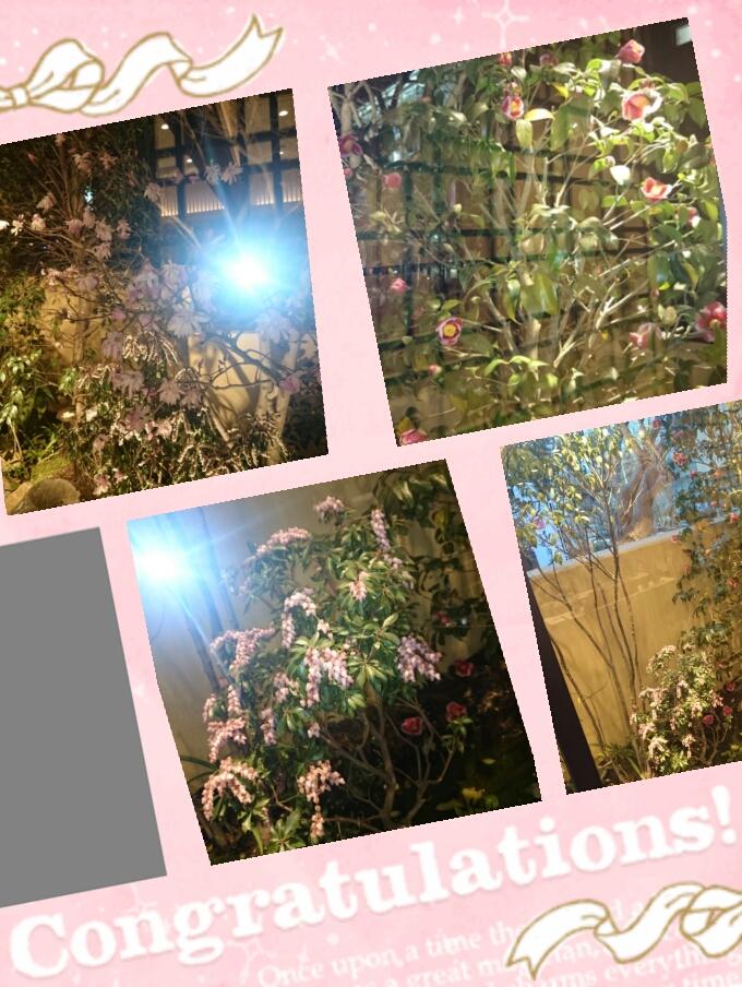 2015梅の花3