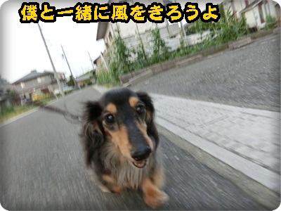 sannpo013.jpg