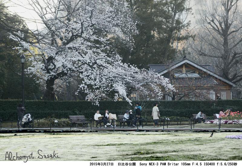 日比谷公園の桜DSC09028