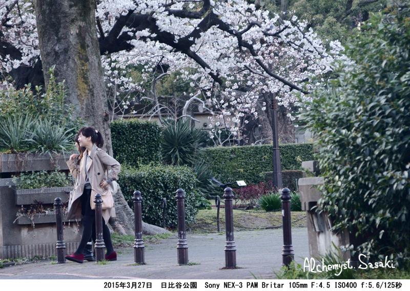 日比谷公園の桜DSC09009