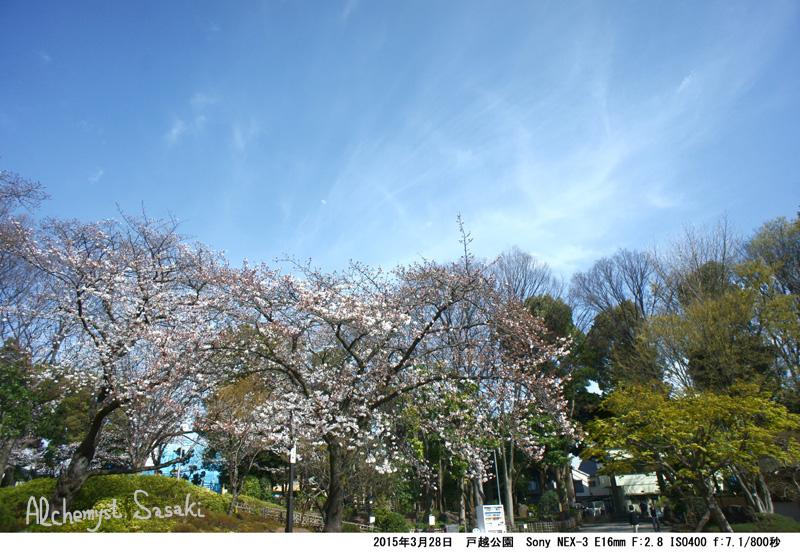 戸越公園の桜DSC09093