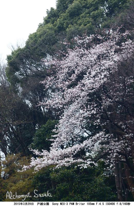 戸越公園DSC09158