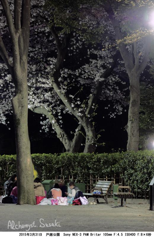 戸越公園の夜桜DSC09646