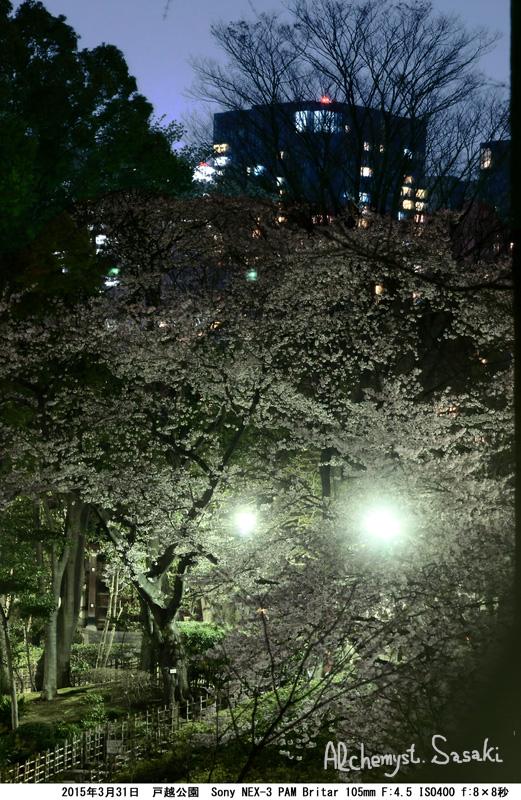 戸越公園の夜桜DSC09675