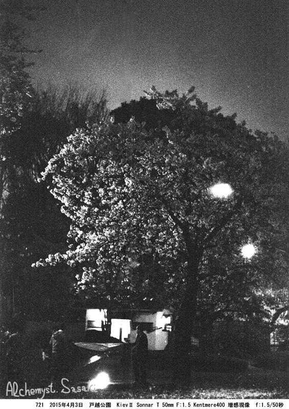 夜桜721-5