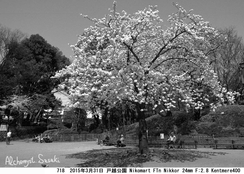 桜718-18 Ⅱ