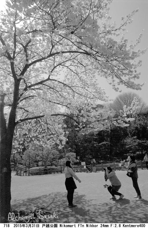 桜718-20