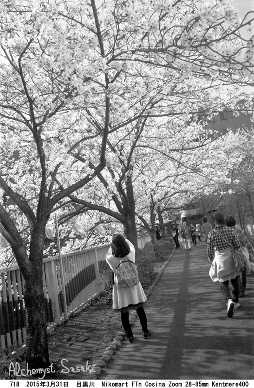 桜718-33