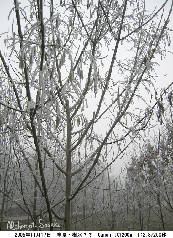 樹氷IMG_7109