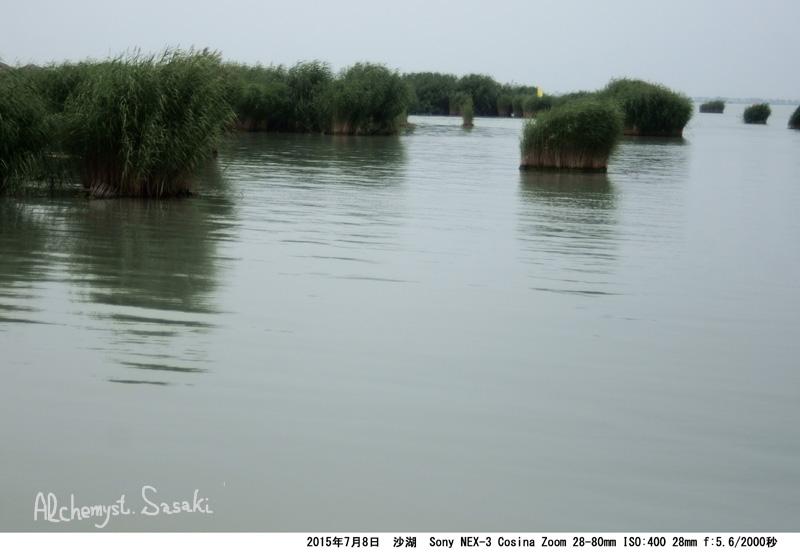 沙湖DSC02511(1)