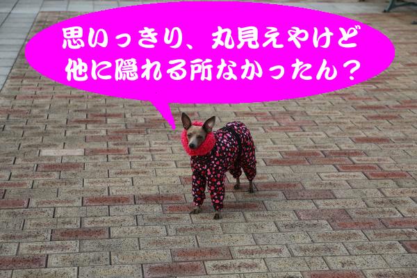 IMG_0381_convert_20150212230156.jpg