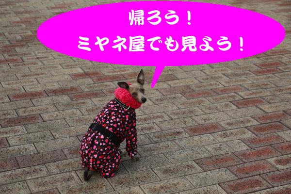 IMG_0388_convert_20150212230843.jpg