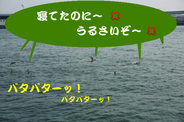 IMG_0404_convert_20150212231600.jpg